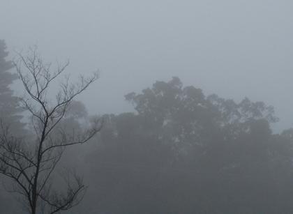 Fog-01blog
