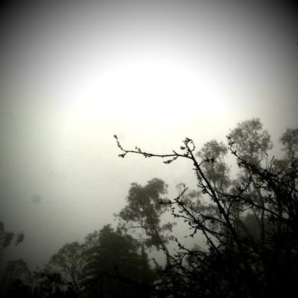 Mist-blog