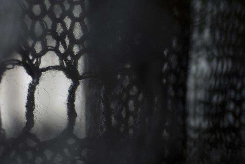 Treetop-1blog