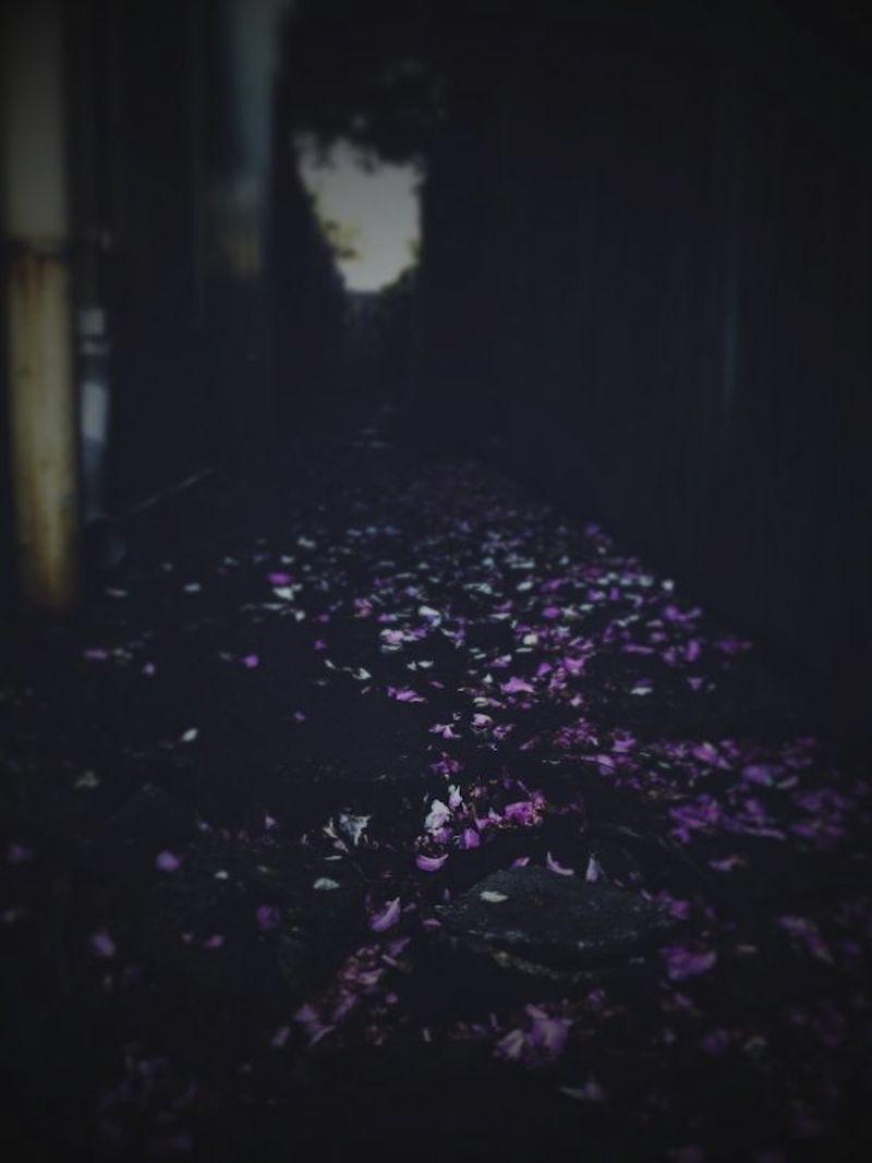 Wanderings-4