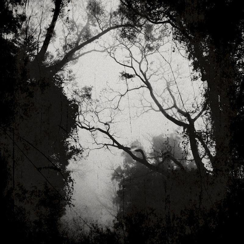 Wanderings-8
