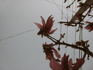 Magnoliadarkblog