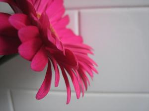 Pink01blog