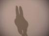 Bunny01_1