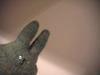 Bunny03_1